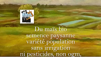 Maïs semence paysanne Bio